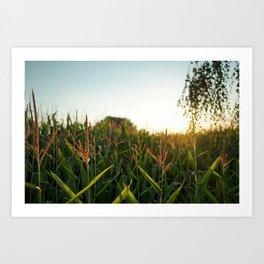 Cornfield Sunset Art Print