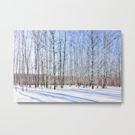 March Sun Over The Snow-Covered Birch Grove, Long Blue Shadows Metal Print