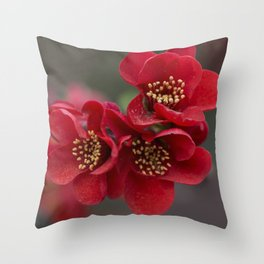 Red Chaenomeles flowers Throw Pillow
