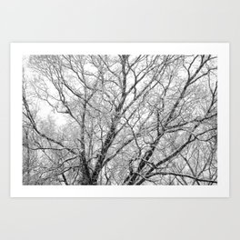 First Snow 2013 Art Print