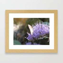 Butterfly and the lilac flower Framed Art Print