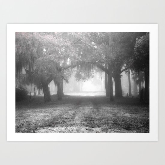 Foggy Evergreen Art Print