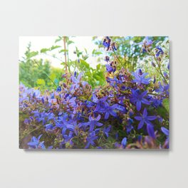 Campanula Dreams Metal Print