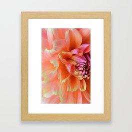 Textura: Dahlia Petals Framed Art Print