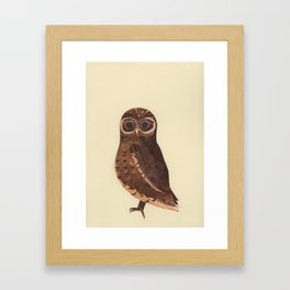 Little Owl Framed Art Print