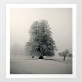 White beech Art Print
