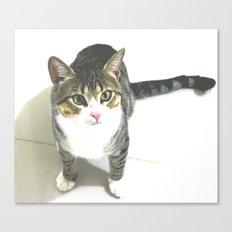 Miojo Cat. Canvas Print