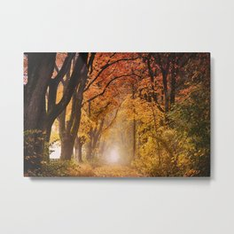 Autumn Fall Forest Path -  Nature Landscape Photography Metal Print