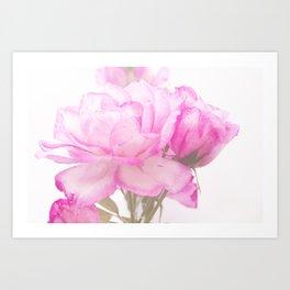 Light Pink Blend Rose #1 #floral #decor #art #society6 Art Print