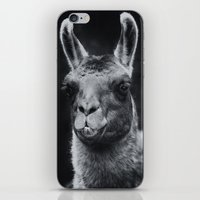 lama iPhone & iPod Skins featuring Lama by Oliver Wutscher