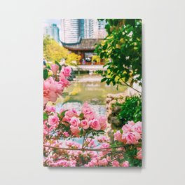 Photograph of Small Pink Roses in front of the Chinese Botanical Garden in China Town Vancouver Metal Print