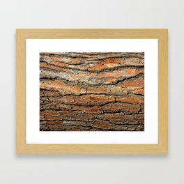 Bark 05 Red Brown Framed Art Print