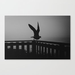 Seagull wings Canvas Print