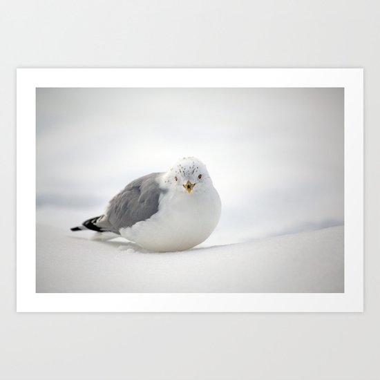 Snow Gull Art Print
