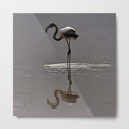 Juvenile Flamingo In Grey With Reflection Metal Print