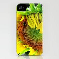 Sunflower Morning Slim Case iPhone (4, 4s)