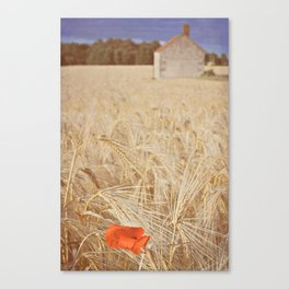 Poppy In A Field Canvas Print