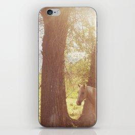 Caballo del Prado iPhone & iPod Skin