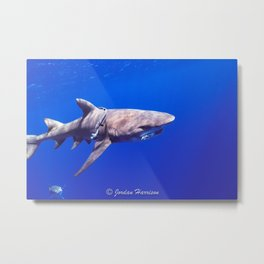 Fish Are Friends, Not Food Metal Print