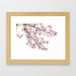 cherry blossom flowers Framed Art Print
