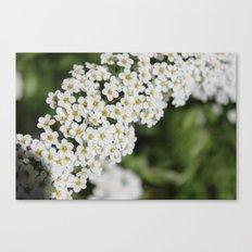 Lil flower buds Canvas Print