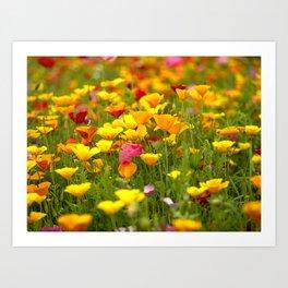 Mixed Poppies Art Print