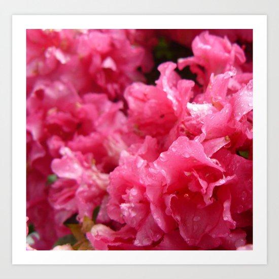 Pink Petals Art Print