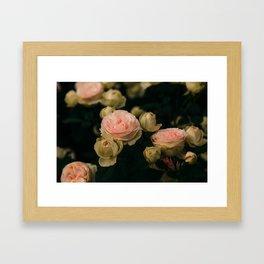 Korean Roses Framed Art Print