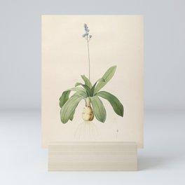 scilla lilio-hyacinthus Redoute Roses 1 Mini Art Print