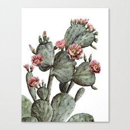 Prickly Pear Cactus Painting Canvas Print