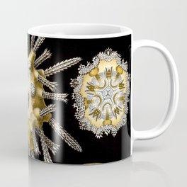 Ernst Haeckel Echinidea Sea Urchin Coffee Mug