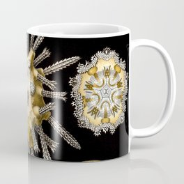 Ernst Haeckel Echinidea Sea Urchin Coffee Mug