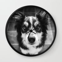 border collie Wall Clocks featuring Tri-coloured border collie. by liamgrantfoto