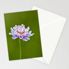 Pincushion Flower Stationery Cards
