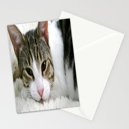 Kloeh the rescued cat Stationery Cards