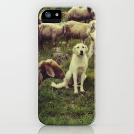 Herding dog, male, south of Israel, scaned sx-70 Polaroid iPhone Case
