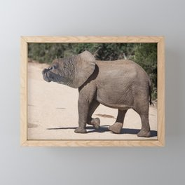 Elephant Seal In Search Of Water Framed Mini Art Print