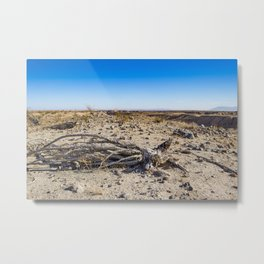 Uprooted Ocotillo Plant in the Middle of Dust and Rocks in the Anza Borrego Desert, California Metal Print