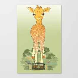 Big Publicity for a Baby Giraffe Canvas Print