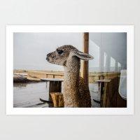 lama Art Prints featuring Lama by miloezger