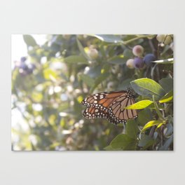 Butterfly and Blueberries  Canvas Print