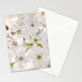 Pear Blossoms 5 Stationery Cards