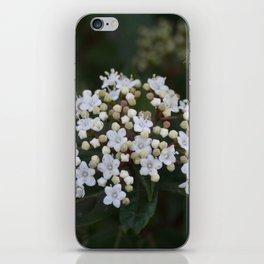 Viburnum tinus flowers and buds iPhone Skin
