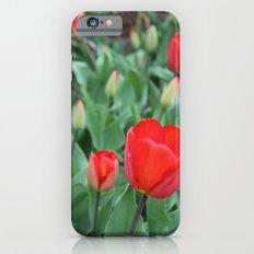 Tulip Darlings iPhone 6 Slim Case