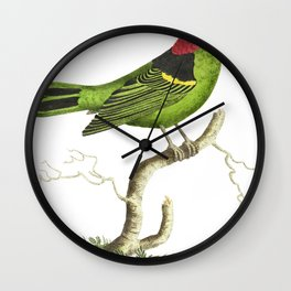 Collared tanager or Green tanager  from The Naturalists Miscellany (1789-1813) by George Shaw (1751- Wall Clock