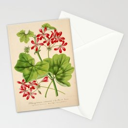 Pelargonium Hederifolium Vintage Botanical Floral Flower Plant Scientific Illustration Stationery Cards