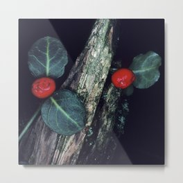 Exotic, Mysterious Cotoneaster Flowering Plant Metal Print