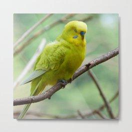 Yellow Green Budgie Metal Print