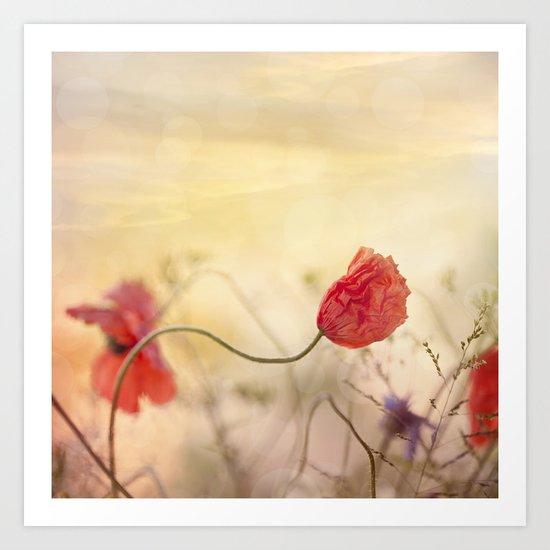 Poppy flower and sunset Art Print