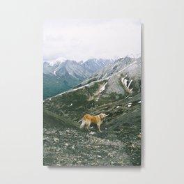 Mountain Pup Metal Print